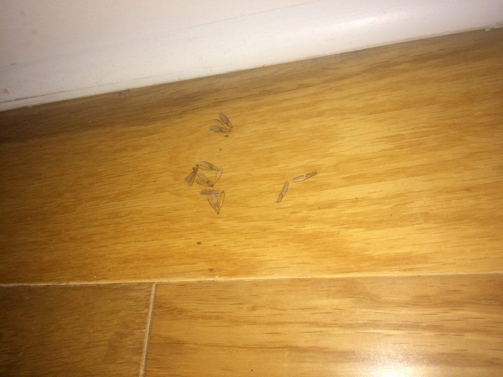 I Found Termites In My Apartment Here S How I Handled It Advice For Millennials